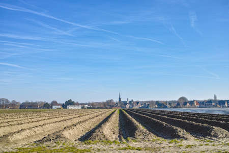 Rows on white asparagus  fields not yet covered with plastic film, begin of new asparagus season on asparagus farm in Netherlands, spring country landscape