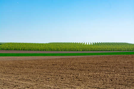 Spring landscape with farmers plowed fields, green grass, fruit trees orchards and blue sky, nature background Stockfoto