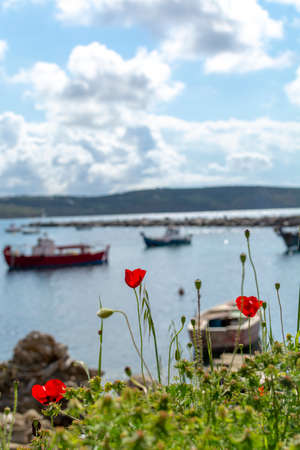 Landscape with colorful spring wild flowers, quiet sea harbor and traditional greek fisher boats Фото со стока
