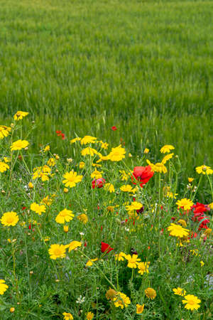 Flora of Sicily, colorful flossom of wild flowers on meadow in mountains close up, production of natural bio honey. Reklamní fotografie - 124904158