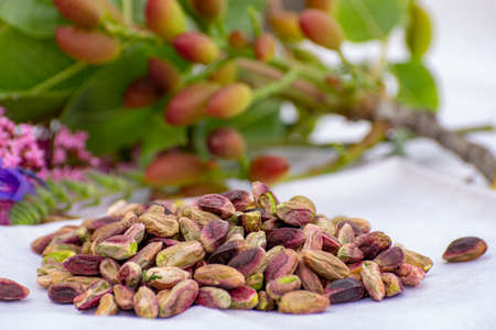 Sweet, delicate, fragrant nuts, Bronte pistachios with  brilliant green colour, ingredient for Italian cuisine, ice creams, cakes, pesto