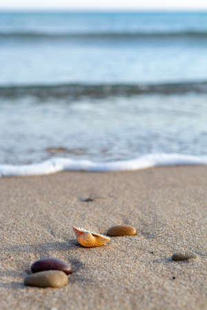 Nature background with sea coastline, sea shells and stones close up Reklamní fotografie - 124905309