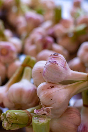 Bulbs of young new fresh garlic on farmer market close up Stock Photo
