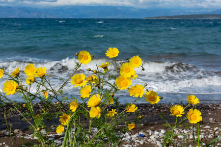 Dramatic view on dark blue stormy sea and wild yellow flowers on Peloponnese, Greece