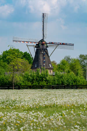 Old wind mill, blue sky and pasture with wild blossoming flowers, Dutch countryside landscape