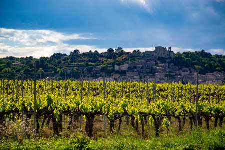 Production of rose, red and white wine near small town Lacoste in Luberon, Provence, South of France, vineyard in early summer Imagens