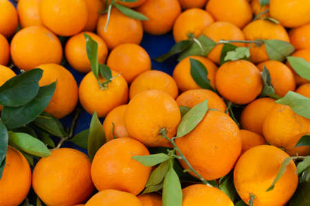 New harvest of sweet ripe oranges fruits on market close up