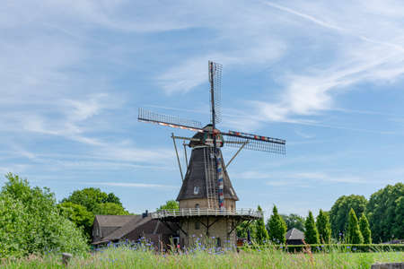 Dutch grain wind mill and corn field with blue flowers in summer, Oerle, Netherlands