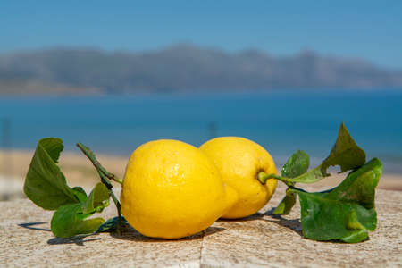 Fresh ripe citrus fruits, Italian lemons with leaves served on terrace with sea view in sunny day