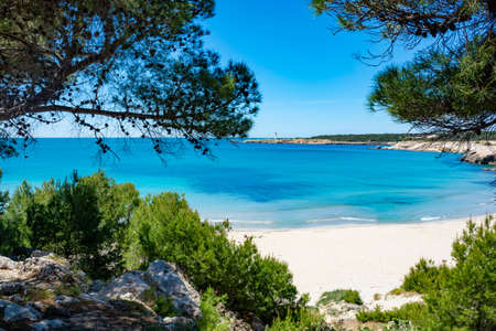 Crystal clear blue Mediterranean sea water on St.Croix Martigues beach and green mediterranean pine trees, Provence, France