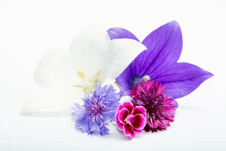 White and purple bell flowers and cornflowers close up, isolated on white background copy space 스톡 콘텐츠