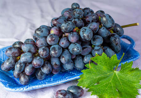 Bunch of ripe blue-black table grapes with leaf served on blue plate as sweet fruit dessert