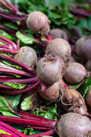 Farmer market in Nafplio, Greece, new harvest of red beetroot vegetable, fresh and healthy organic food close up Stock fotó