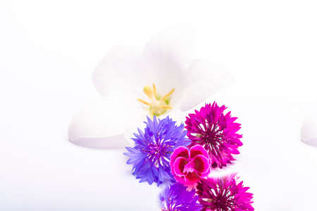 White bell flower and purple cornflowers close up, isolated on white background copy space