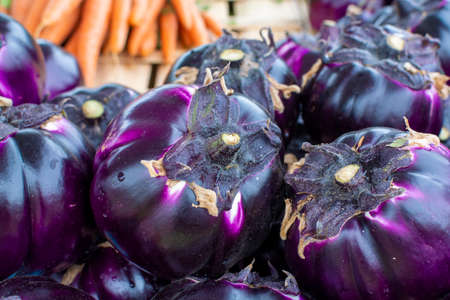 New harvest of tasty Sicilian round Viola eggplants vegetables on market close up 写真素材