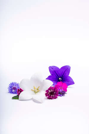 White and purple bell flowers and cornflowers close up, isolated on white background copy space