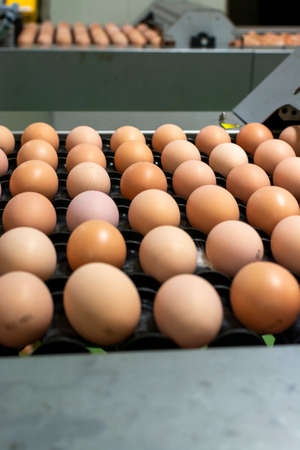 Modern packing, handling and transportation to incubators of high quality organic hatching eggs in Europe, high level of automation