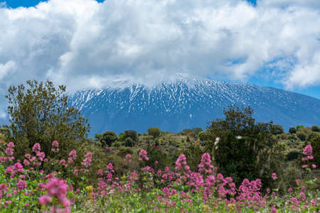 Flora of active stratovolcano Mount Etna on east coast of island Sicily, Italy in spring
