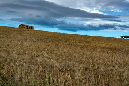View on golden fields with ripe sicilian durum pasta wheat on sunset Stock Photo