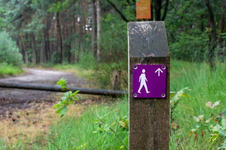 Forest walking path network signpost in Kempen forest, brabant, Netherlands