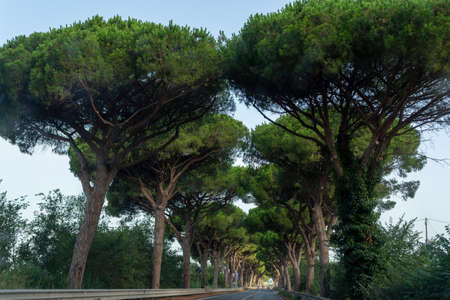 Scenic driving on new via Appia road S7 with high green  mediterranean pine trees connected Rome, Latina and Terracina, Italy 写真素材