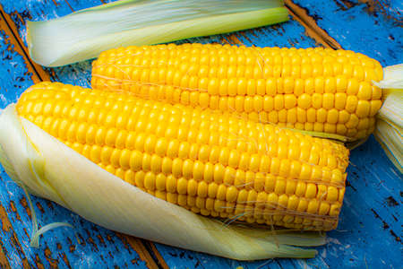 Two sweet yellow corn cobs on blue wooden table close up
