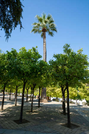 Ancient moorish Andalucian style to create symmetric orange tree gardens, south of Spain, Jerez de la Frontera