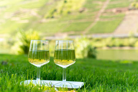 Tasting of famous German quality white wine riesling, produced in Mosel wine regio from white grapes growing on terraced vineyards in Mosel river valley in Germany Zdjęcie Seryjne