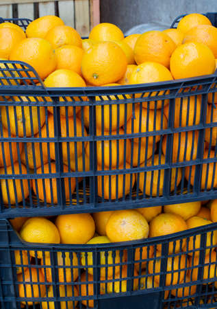 Plastic containers full with fresh ripe yellow oranges citrus fruits, fruit transportarion