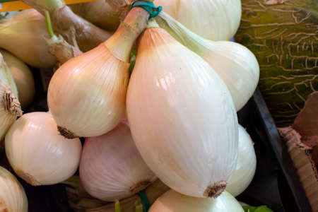 Fresh harvested white onion for sale on weekly spanish market in Andalusia, Spain, close up