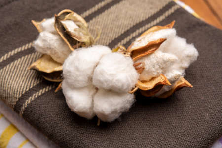 Soft natural fiber kitchen and bed textile made from organic cotton bolls close up Reklamní fotografie