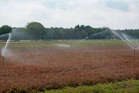 Field irrigation system with water sprinklers working on farm field