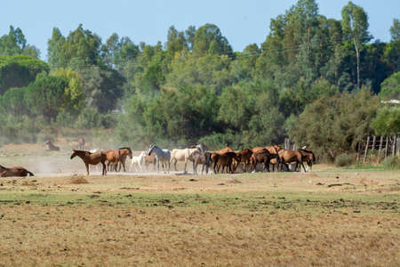 Herd of horses on village farm in El Rocio, Andalusia, Spain