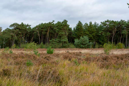 Landscape with green Kempen forests in North Brabant, Netherlands in autumn Stok Fotoğraf