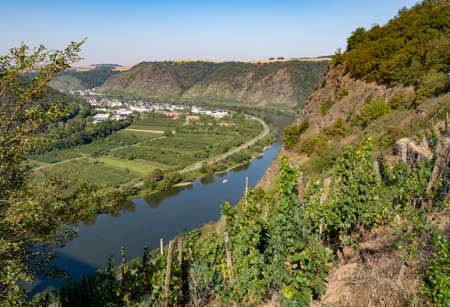 Landscape view on Mosel river valley and green terraced vineyards, Germany, production of quality white and red wine, riesling