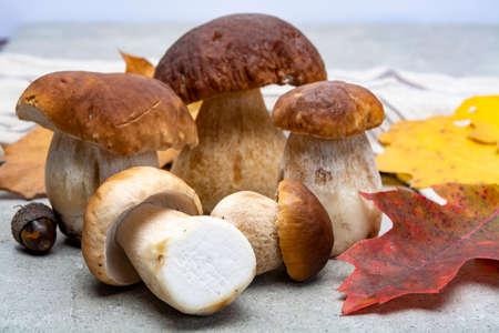 Frische rohe essbare Waldpilze Boletus Edulis oder Steinpilze, leckeres vegetarisches Essen aus nächster Nähe