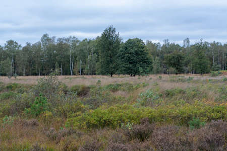 Landscape with green Kempen forests in North Brabant, Netherlands in autumn