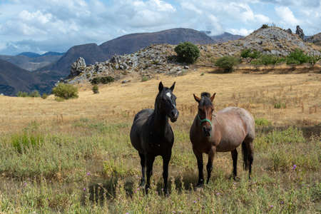 Landscape with horses on meadows in Sierra Nevada mountrains, Andalusia, Spain