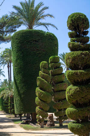 Sculpted trees in different forms in old public park, Genoves park in Cadiz, Andalusia, Spain in summer
