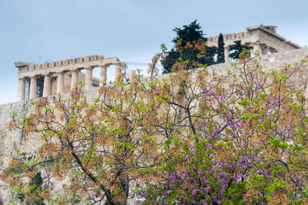 View on Acropolis hill in Athens from spring garden with blossoming trees