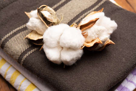 Soft natural fiber kitchen and bed textile made from organic cotton bolls close up Stockfoto