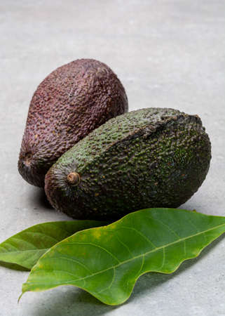 New harvest of fresh ripe hass avocado close up