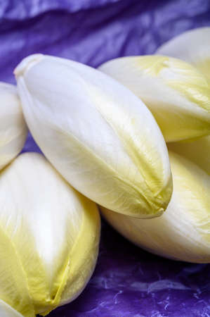 Fresh white belgian endive or chicory salad heads close up
