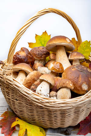 Basket with fresh edible forest mushrooms Boletus Edulis or porcini fungus, tasty vegetarian food, ready for cook