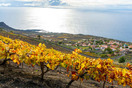 Terraced vineyards located on mountains slopes near village Fuencaliente, south wine production region on La Palma island, Canary, Spain in winter