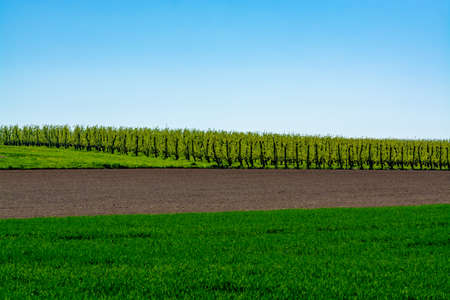 Spring landscape with farmers plowed fields, green grass, fruit trees orchards and blue sky, nature background 스톡 콘텐츠