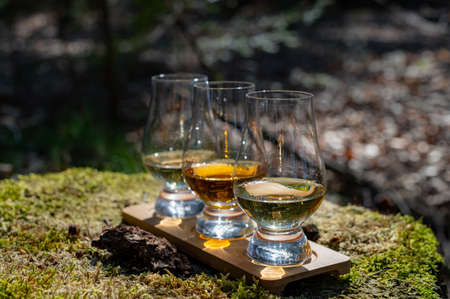 Tasting of scotch single malt whisky from Islay island, most intensely flavoured of all whiskies in Scotland with green moss and old stump background 写真素材
