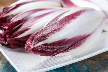 Fresh organic Belgian endivi or red chicory lettuce close up on white plate Banque d'images