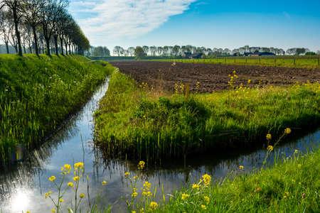 Spring nature landscape in sunny day in Betuwe, Gelderland, Netherlands Banque d'images