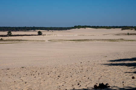 Desert nature landscapes in national park De Loonse en Drunense Duinen, North Brabant, Netherlands in sunny day 免版税图像